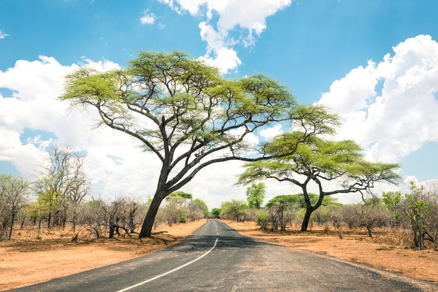 African landscape with empty road and trees